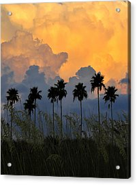 Eight Palms Acrylic Print by David Lee Thompson