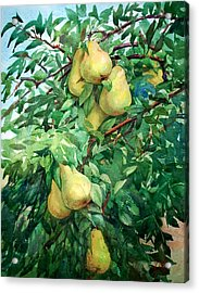 Eight Pears Acrylic Print by Peter Sit