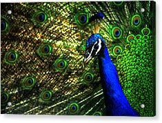 Acrylic Print featuring the photograph Eighteen Eyes by Wayne King