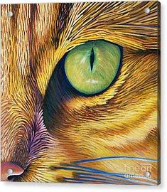 El Gato Acrylic Print by Brian  Commerford