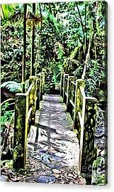 El Yunque Bridge Acrylic Print by Carey Chen