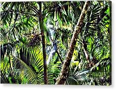 El Yunque Canopy Acrylic Print by Carey Chen