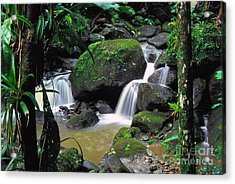 El Yunque National Forest Waterfall Acrylic Print by Thomas R Fletcher