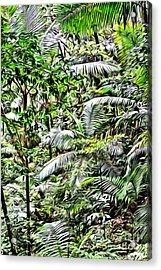 El Yunque Rainforest 4 Acrylic Print by Carey Chen