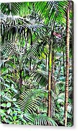 El Yunque Rainforest Acrylic Print by Carey Chen