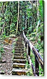 El Yunque Stairway Acrylic Print by Carey Chen