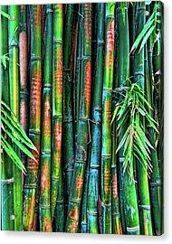 Electric Bamboo 6 Acrylic Print