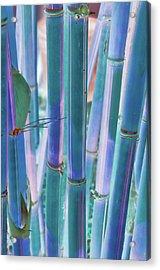 Electric Bamboo 8 Acrylic Print