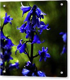Electric Blue Acrylic Print by Bonnie Bruno