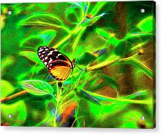 Electric Butterfly Acrylic Print by James Steele