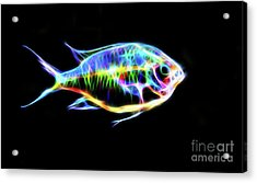Electric Light Tropical Fish Acrylic Print by Photo Captures by Jeffery