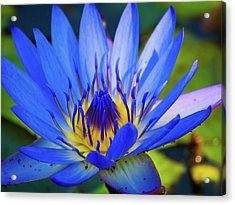 Electric Lily Acrylic Print