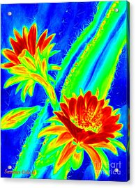 Electric Night Bloomer  Acrylic Print by Summer Celeste