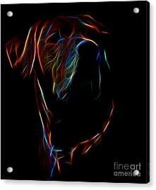 Electric Ridgeback Acrylic Print