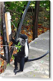 Electrical Work - Monkey Power Acrylic Print