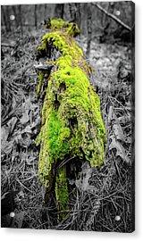 Electro Log Acrylic Print by Andrew Crispi