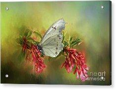 Elegance Acrylic Print by Eva Lechner
