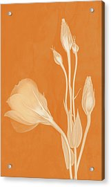 Elegance In Apricot Acrylic Print