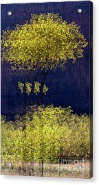 Elegance In The Park Horizontal Adventure Photography By Kaylyn Franks Acrylic Print
