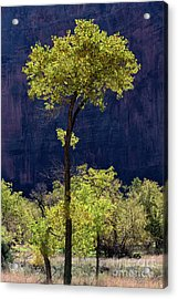 Elegance In The Park Utah Adventure Landscape Photography By Kaylyn Franks Acrylic Print