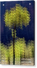Elegance In The Park Vertical Adventure Photography By Kaylyn Franks Acrylic Print