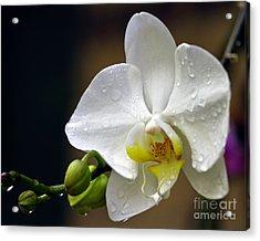 Elegance In White Acrylic Print