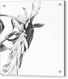 Elegant Coif 2 - Acrylic Print