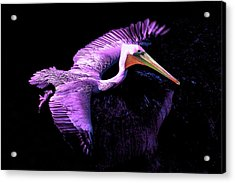 Elegant Flight In Violet Acrylic Print