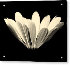 Elegant Acrylic Print by Julie Lueders