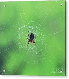 Elegant Web With Spider Dry Brush Effect Acrylic Print by Photo Captures by Jeffery