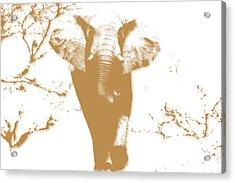 Elephant 2 Acrylic Print