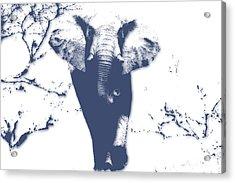 Elephant 3 Acrylic Print