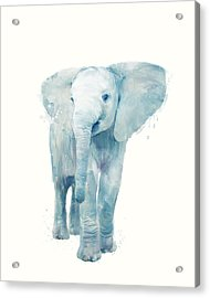 Elephant Acrylic Print by Amy Hamilton