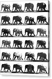 Elephant Animal Locomotion - Bw Acrylic Print by Aged Pixel