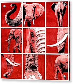 Elephant Animal Decorative Red Multiptych 1 - By  Diana Van Acrylic Print