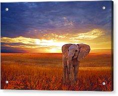 Elephant Baby Acrylic Print