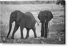 Elephant Buddies - Black And White Acrylic Print by Nancy D Hall