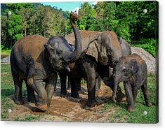 Elephant Cool Down Acrylic Print