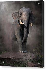 Elephant Acrylic Print by Daniel Eskridge