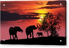 Elephant Family At Sunset Acrylic Print by Jaroslaw Grudzinski