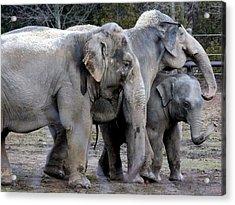 Elephant Family Acrylic Print by Laurel Talabere