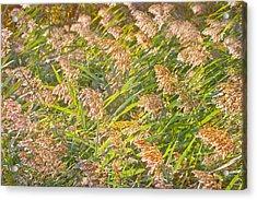 Elephant Grass Photo Acrylic Print by Peter J Sucy