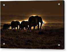 Elephant Herd On The Masai Mara Acrylic Print