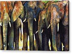 Elephant Herd Acrylic Print by Paul Dene Marlor