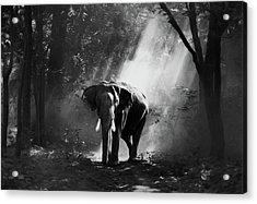Elephant In The Heat Of The Sun Black And White Acrylic Print by Georgiana Romanovna