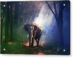 Elephant In The Heat Of The Sun Acrylic Print by Georgiana Romanovna