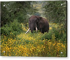 Elephant Of The Crater Acrylic Print