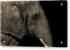 Elephant Portrait Acrylic Print by Martin Newman