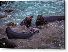 Elephant Seals In The Surf Acrylic Print by Garry Gay