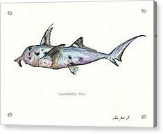 Elephant Shark Acrylic Print